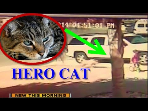 Cat Saves Boy from Dog!